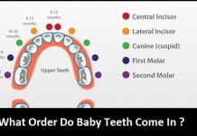 What Order Do Baby Teeth Come In