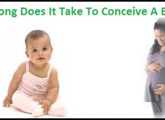 How Long Does It Take To Conceive A Baby